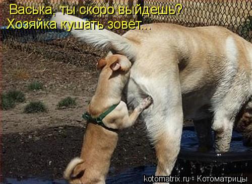 Котоматрица: Васька, ты скоро выйдешь?  Хозяйка кушать зовёт...