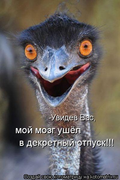 Котоматрица: -Увидев Вас,  мой мозг ушёл  в декретный отпуск!!!