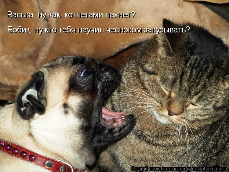 Котоматрица: Бобик, ну кто тебя научил чесноком закусывать? Васька, ну как, котлетами пахнет?