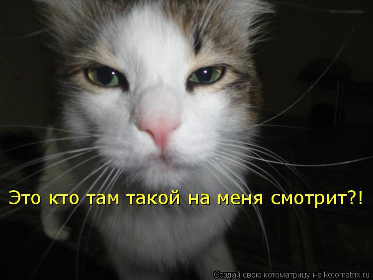 Котоматрица: Это кто там такой на меня смотрит?!