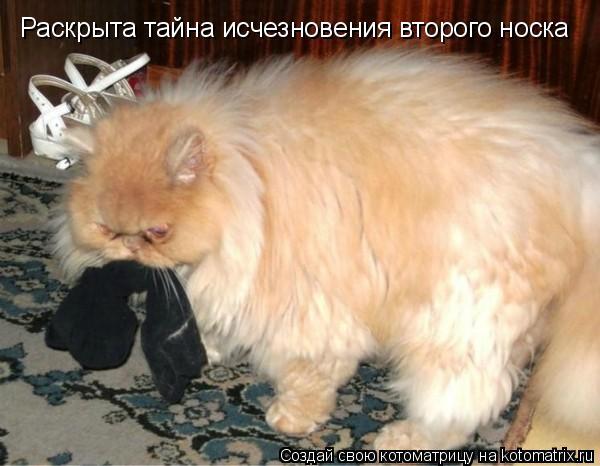 Котоматрица - Раскрыта тайна исчезновения второго носка