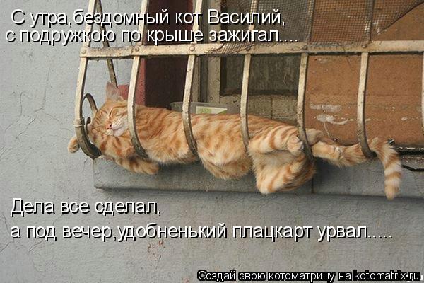 Котоматрица: С утра,бездомный кот Василий, с подружкою по крыше зажигал.... Дела все сделал, а под вечер,удобненький плацкарт урвал.....