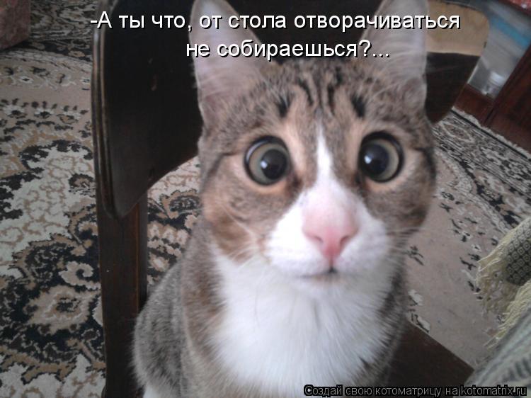 Котоматриця!)))) - Страница 8 974171