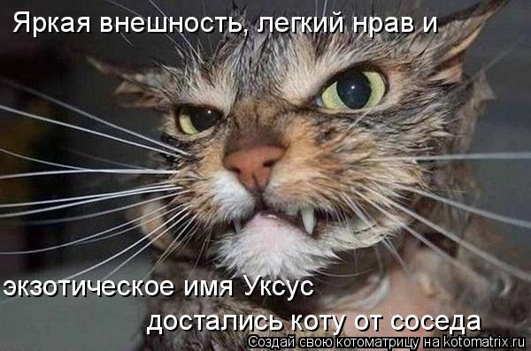 Котоматрица: Яркая внешность, легкий нрав и экзотическое имя Уксус  достались коту от соседа