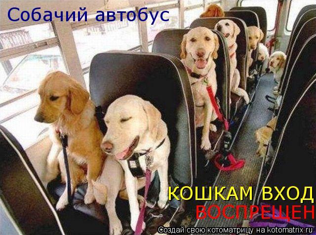 Котоматрица: Собачий автобус КОШКАМ ВХОД ВОСПРЕЩЕН