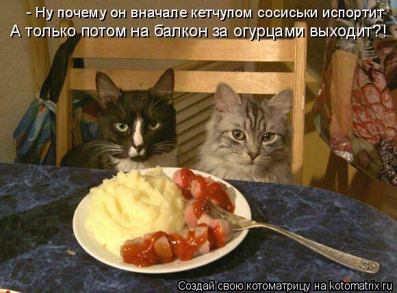 Котоматрица: - Ну почему он вначале кетчупом сосиськи испортит А только потом на балкон за огурцами выходит?!