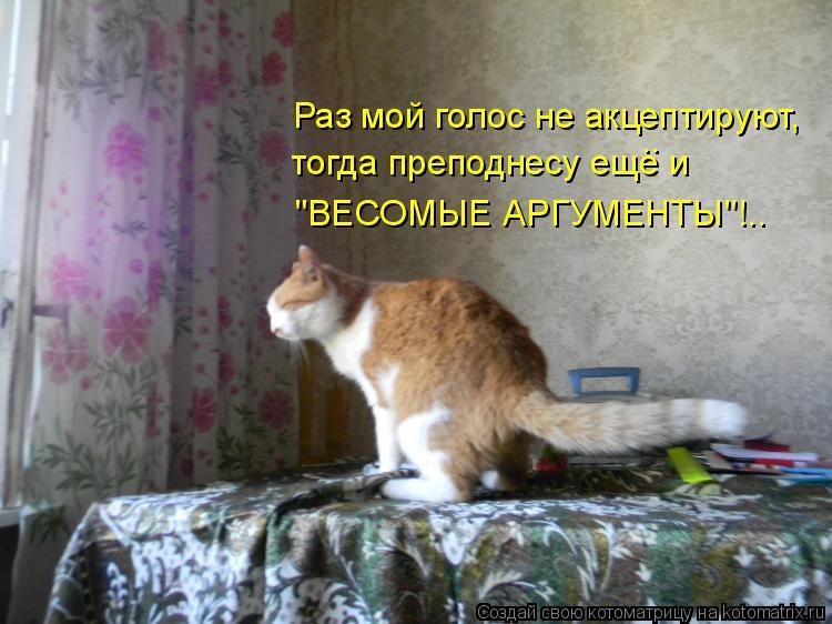 """Котоматрица: Раз мой голос не акцептируют, тогда преподнесу еще и """"ВЕСОМЫЕ АРГУМЕНТЫ""""!.. .."""