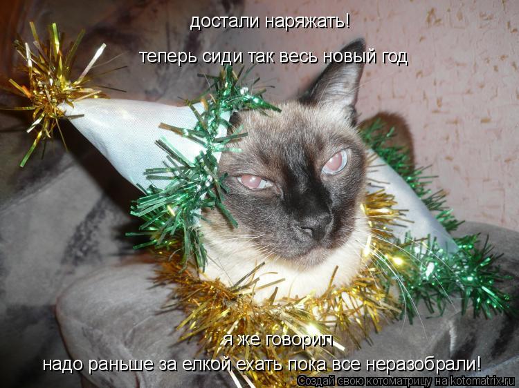 Котоматрица: достали наряжать! теперь сиди так весь новый год я же говорил  надо раньше за елкой ехать пока все неразобрали!