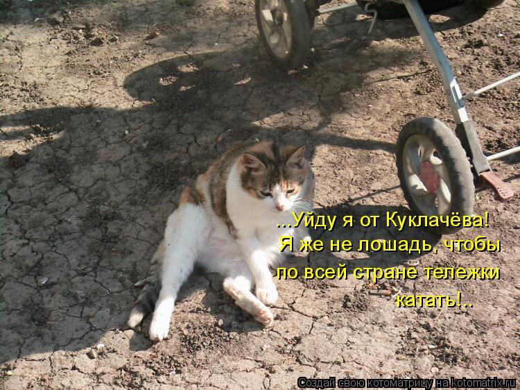 Котоматрица: ...Уйду я от Куклачёва! Я же не лошадь, чтобы по всей стране тележки катать!..
