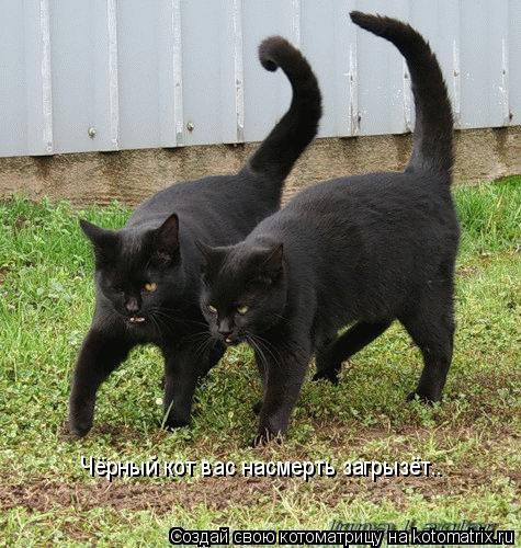 Котоматрица: Чёрный кот вас насмерть загрызёт..
