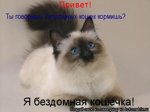 Котоматрица: Привет!   Ты говоришь, бездомных кошек кормишь? Я бездомная кошечка!