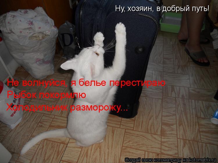 Котоматрица: Ну, хозяин, в добрый путь!  Не волнуйся, я белье перестираю Рыбок покормлю  Холодильник разморожу...