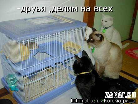 Котоматрица: -друья ,делим на всех