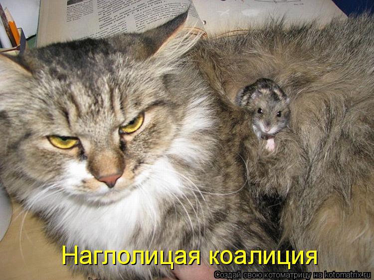 Котоматрица - Наглолицая коалиция