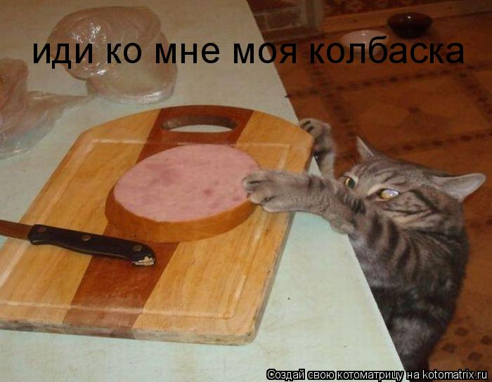 Котоматрица: иди ко мне моя колбаска