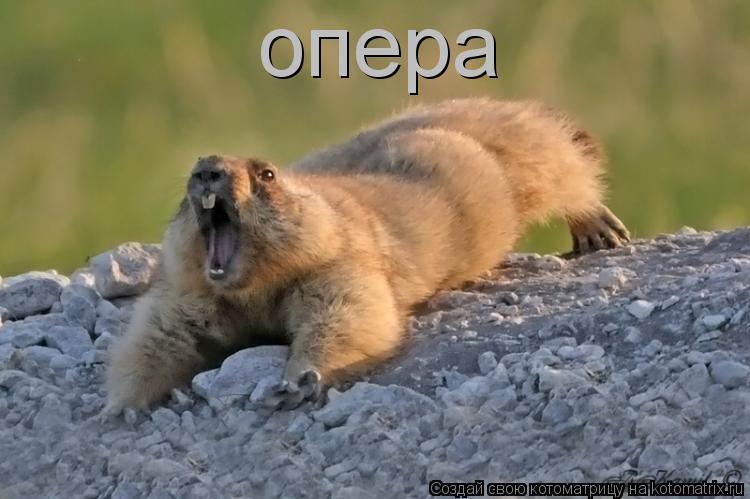 Котоматрица: опера