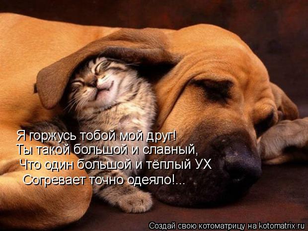 Котоматрица: Я горжусь тобой мой друг! Ты такой большой и славный, Что один большой и тёплый УХ Согревает точно одеяло!...