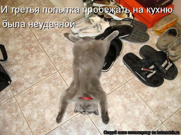 Котоматрица - И третья попытка пробежать на кухню была неудачной