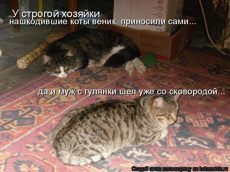Котоматрица - У строгой хозяйки нашкодившие коты веник  приносили сами... да и муж с