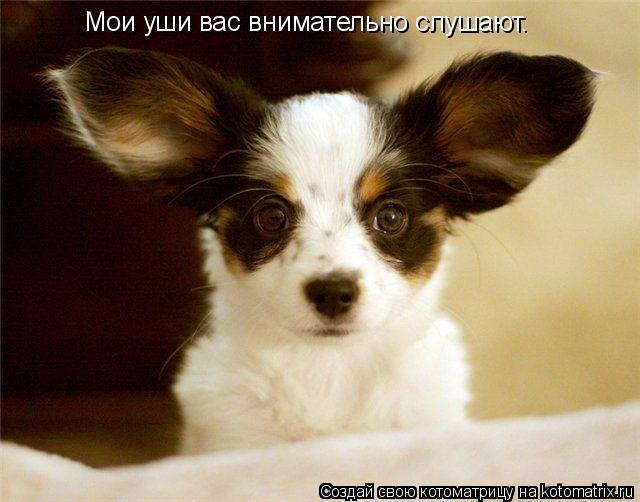 Котоматрица: Мои уши вас внимательно слушают.