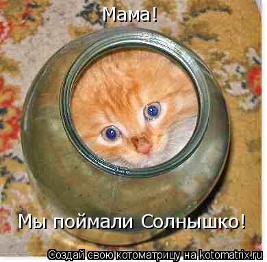 Котоматрица: Мама!  Мы поймали Солнышко!