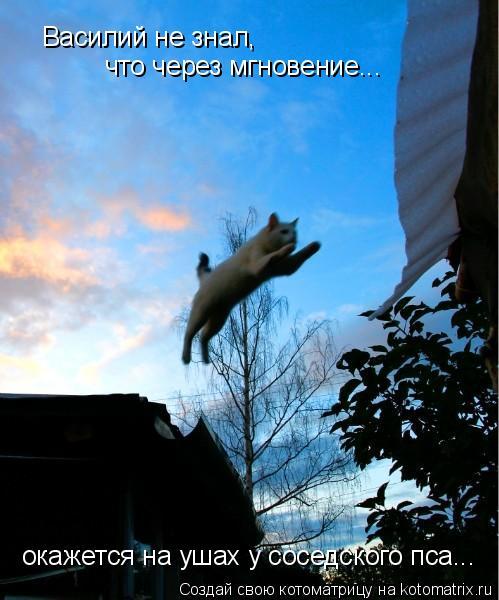 Котоматрица: Василий не знал,  что через мгновение... окажется на ушах у соседского пса...
