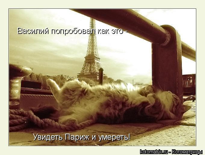 Котоматрица: Василий попробовал как это - Увидеть Париж и умереть!