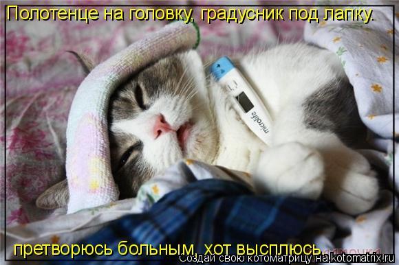 Котоматрица: Полотенце на головку, градусник под лапку.  претворюсь больным, хот высплюсь.