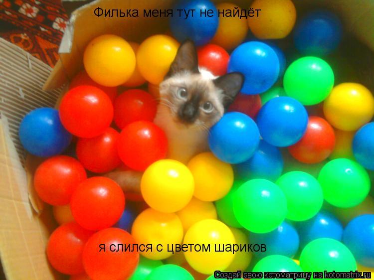 Котоматрица: Филька меня тут не найдёт я слился с цветом шариков