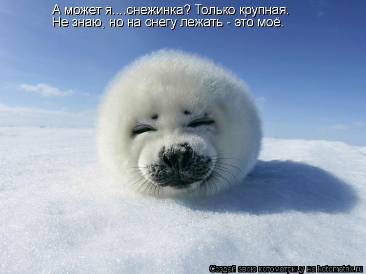 Котоматрица: А может я....снежинка? Только крупная.  Не знаю, но на снегу лежать - это моё.