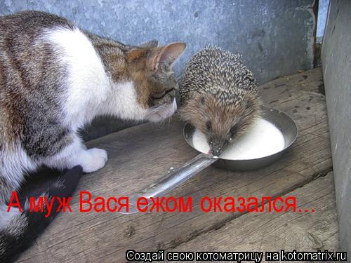 Котоматрица: А муж Вася ежом оказался...
