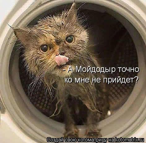 Котоматрица: - А Мойдодыр точно ко мне не прийдет?