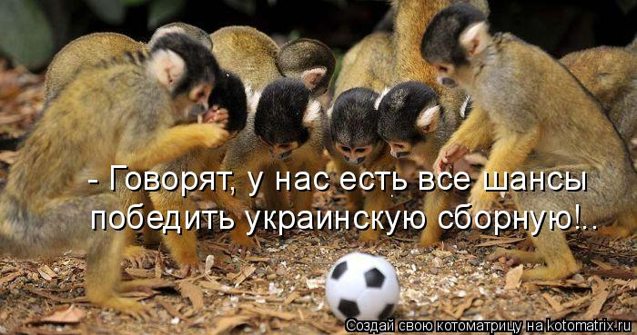 Котоматрица: - Говорят, у нас есть все шансы победить украинскую сборную!..