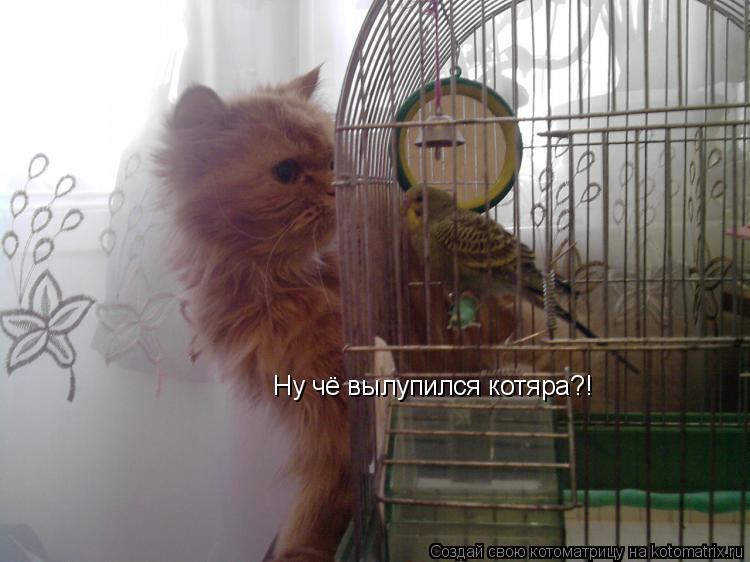 Котоматрица: Ну чё вылупился котяра?!