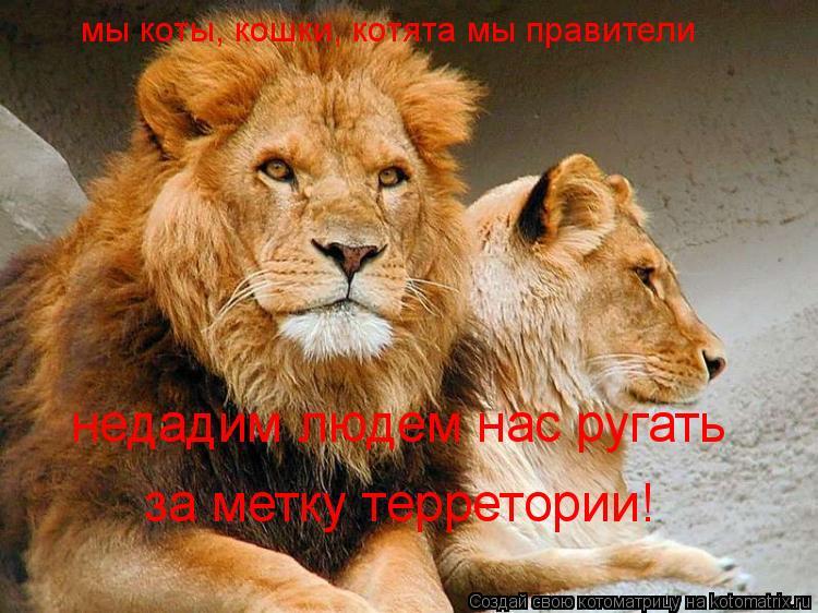 Котоматрица: мы коты, кошки, котята мы правители  недадим людем нас ругать  за метку терретории!