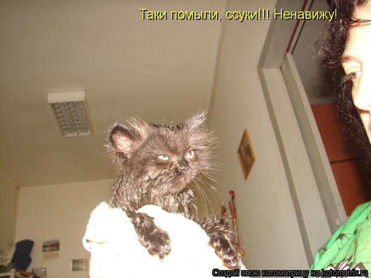 Котоматрица: Таки помыли, ссуки!!! Ненавижу!