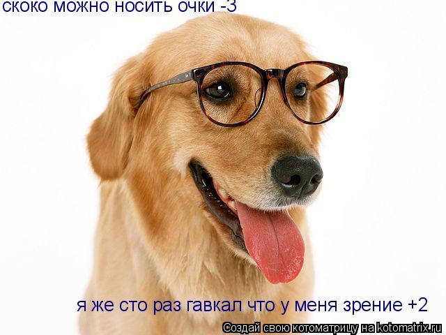 Котоматрица: скоко можно носить очки -3 я же сто раз гавкал что у меня зрение +2