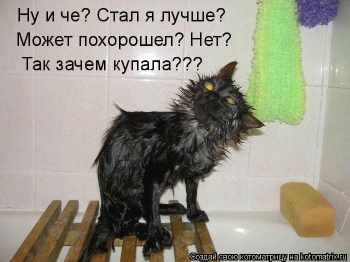 Котоматрица - Ну и че? Стал я лучше?  Может похорошел? Нет? Так зачем купала???