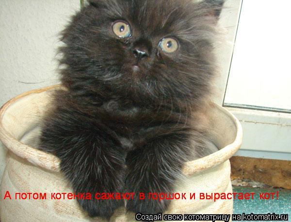 Котоматрица: А потом котенка сажают в горшок и вырастает кот! А потом котенка сажают в горшок и вырастает кот! А потом котенка сажают в горшок и вырастает