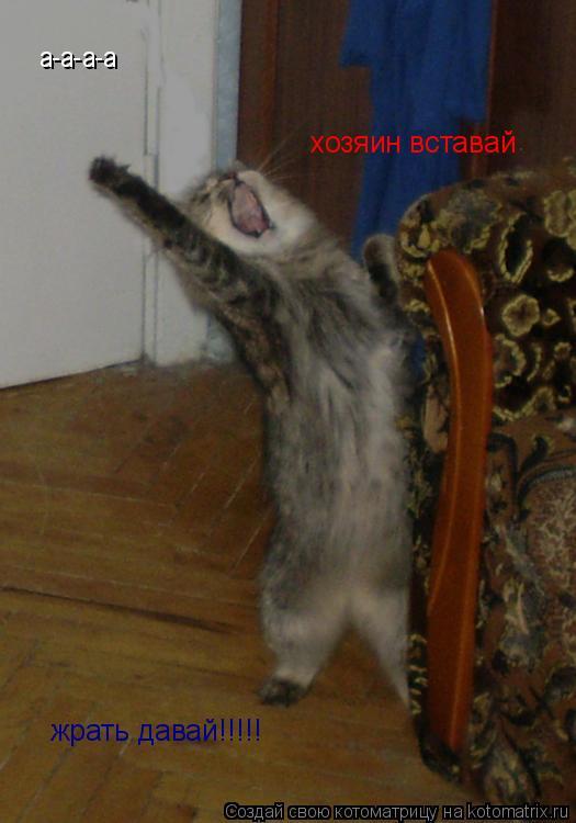 Котоматрица: а-а-а-а  хозяин вставай жрать давай!!!!!