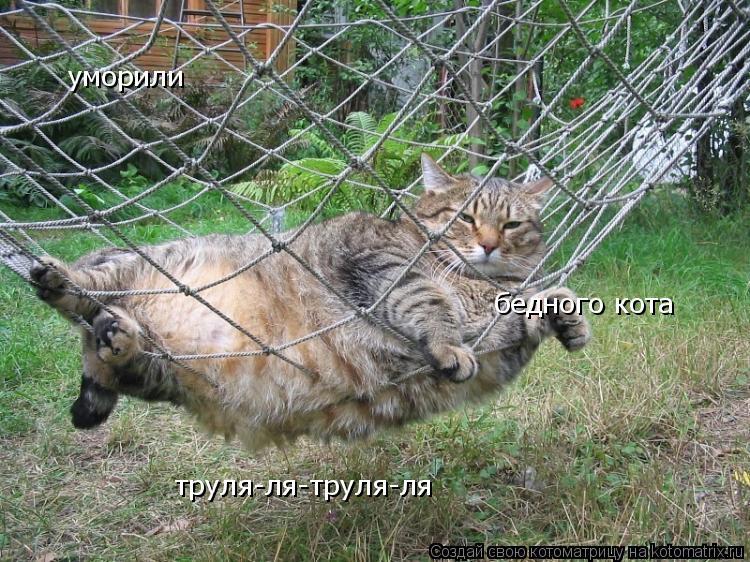 Котоматрица: уморили  бедного кота труля-ля-труля-ля