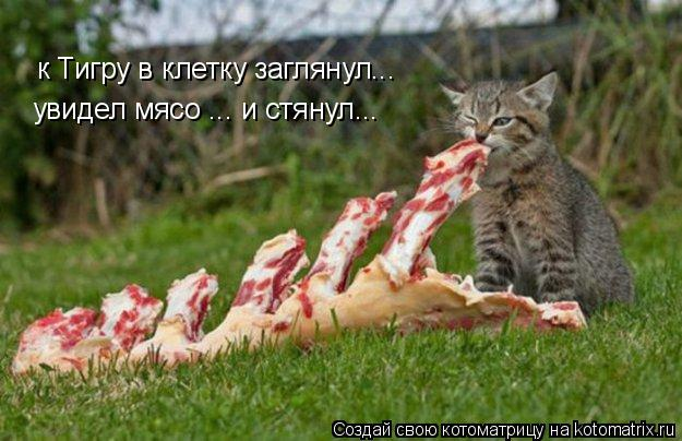 Котоматрица: к Тигру в клетку заглянул... увидел мясо ... и стянул...