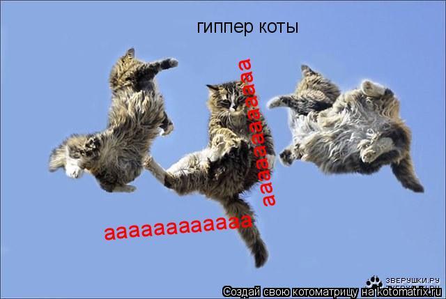 Котоматрица: гиппер коты аааааааааааа аааааааааааа аааааааааааа аааааааааааа