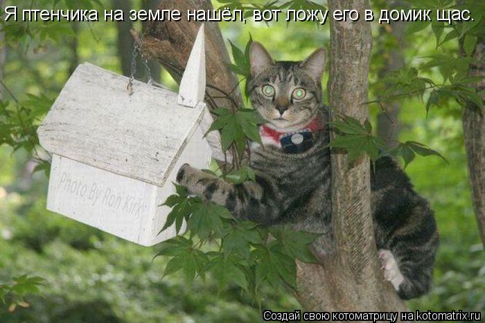 Котоматрица: Я птенчика на земле нашёл, вот ложу его в домик щас.