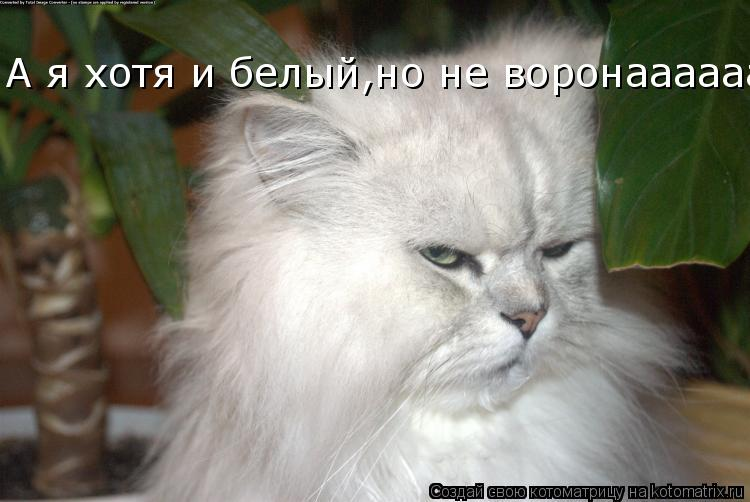 Котоматрица: А я хотя и белый,но не воронааааааа............