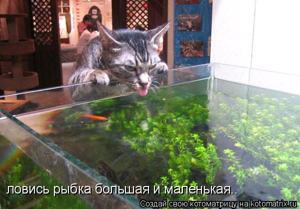 Котоматрица: ловись рыбка большая и маленькая..