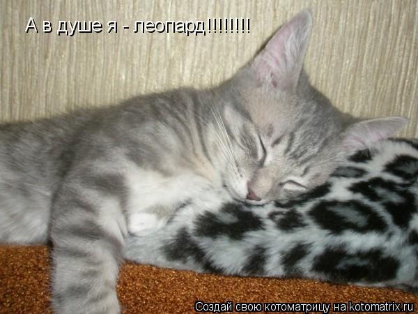 Котоматрица: А в душе я - леопард!!!!!!!!