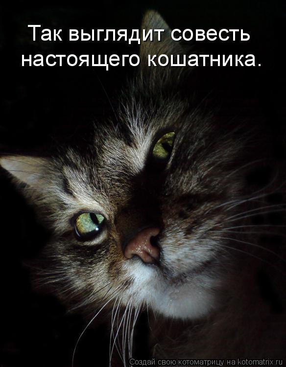 Котоматрица: настоящего кошатника. Так выглядит совесть