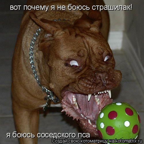 Котоматрица: вот почему я не боюсь страшилак! я боюсь соседского пса