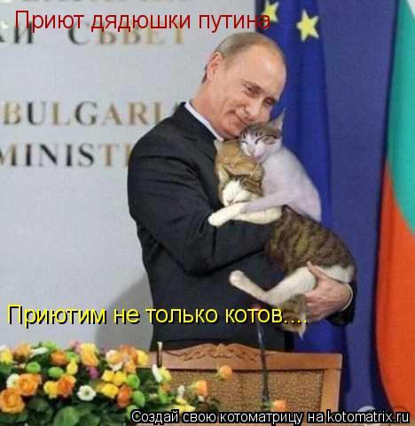Котоматрица: Приют дядюшки путина  Приютим не только котов....